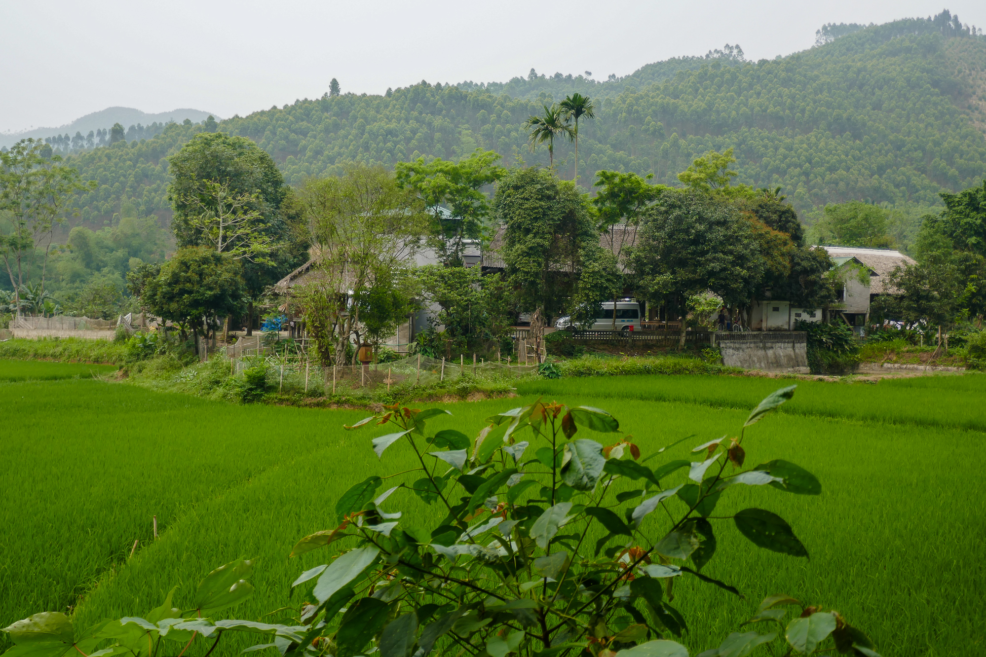 homestay logement ecolodge thac ba vietnam