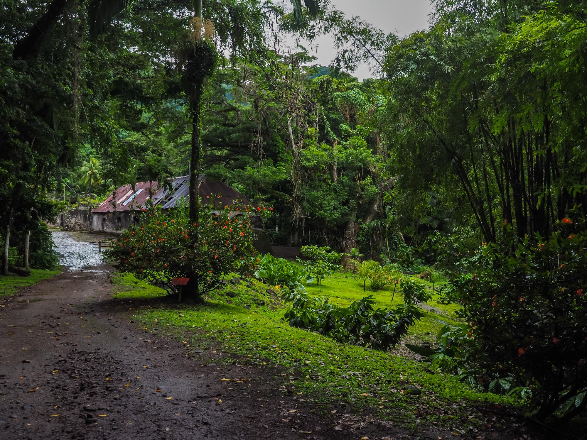 habitation céron, Martinique blog voyage martinique sauvage