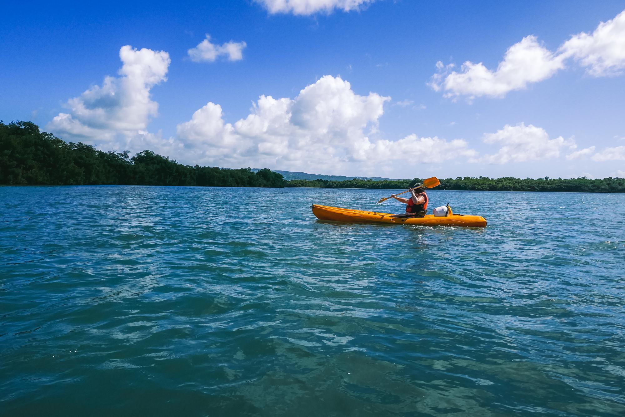 Mangrove, Martinique blog voyage