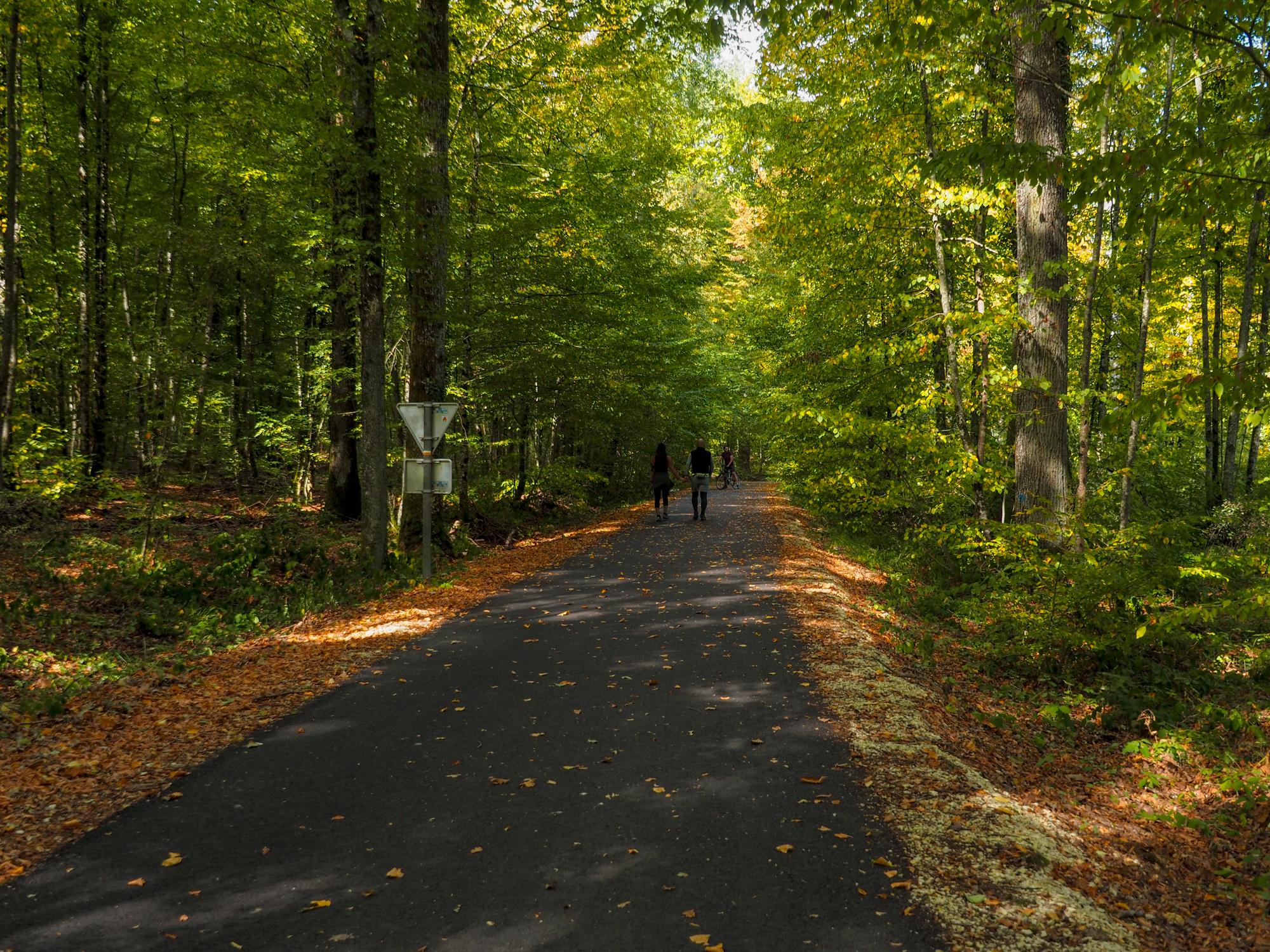 visite lac d'amance et forêt d'orient